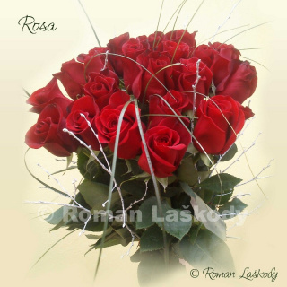 Kytica Rosa