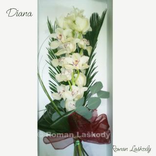 Kytica Diana