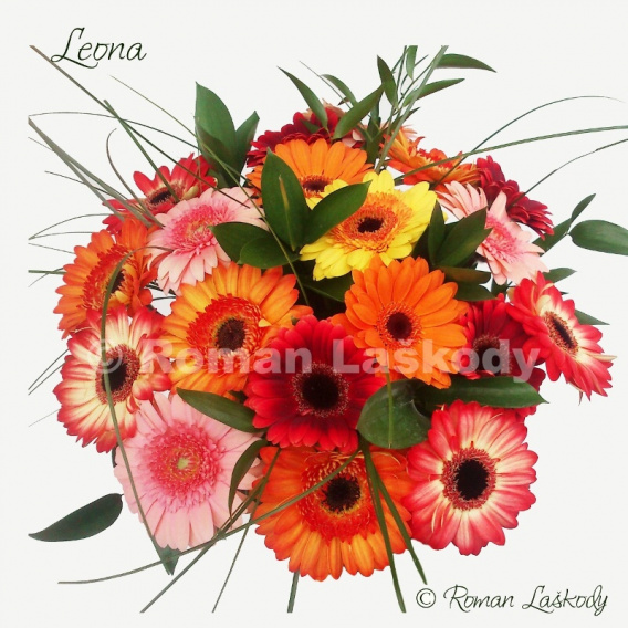 Kytica Leona